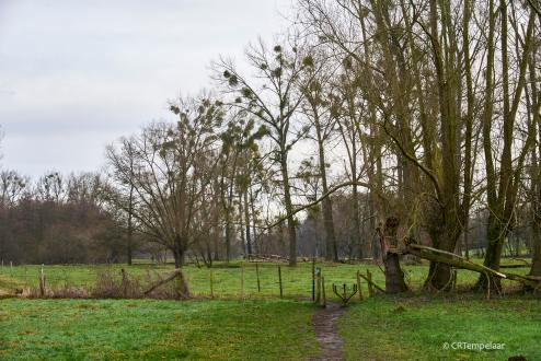 Geullandschap bij Cottessen